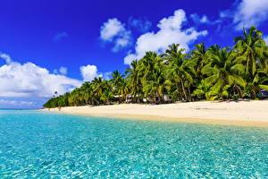 Картинка Тропики Побережье Небо Пальмы Природа