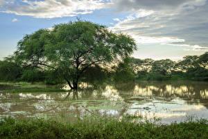Фотографии Тропики Речка Небо Деревья Облака Bagan Myanmar