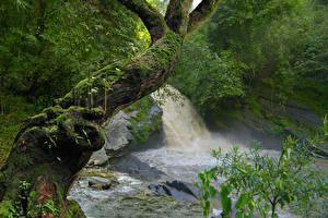 Фотографии Тропики Водопады Ствол дерева Мох Jungle