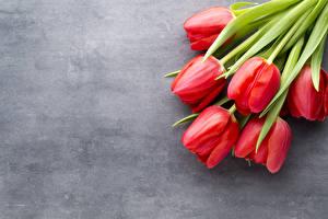 Картинки Тюльпаны Красный Цветы