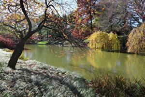 Обои США Сады Пруд Осень Кусты Деревья Трава Brooklyn Botanic Garden Природа картинки