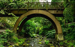 Обои Штаты Парки Мосты Ручей Rhododendron Garden Portland Природа