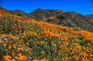 Фотографии Штаты Маки Много Калифорния Холмы Оранжевый Природа