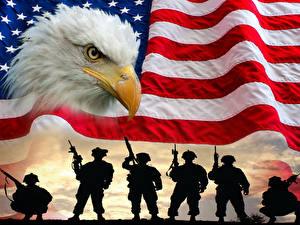 Фотография США Солдаты Птицы Флаг Клюв Силуэт Белоголовый орлан военные