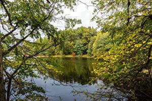 Фотографии Украина Парки Пруд Ветвь Sumy Oblast Trostianets Природа