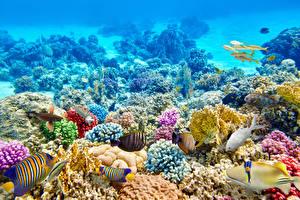 Фото Подводный мир Кораллы Рыбы