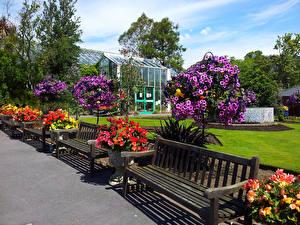Фотографии Великобритания Сады Петунья Скамья Кусты Дизайн Уэльс Swansea Botanic Gardens Природа