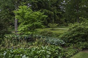 Картинки Великобритания Парки Кусты Деревья Garden Harlow Carr