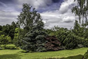 Фото Великобритания Парк Кусты Дерева Газон Garden Harlow Carr Природа