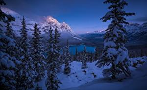 Картинка Зима Горы Пейзаж Канада Ель Деревья Снег Банф Peyto Lake Природа