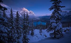 Картинка Зима Гора Пейзаж Канада Ели Дерева Снега Банф Peyto Lake Природа