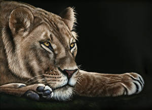 Фотография Большие кошки Львы Рисованные Львица Черный фон Лапы Животные