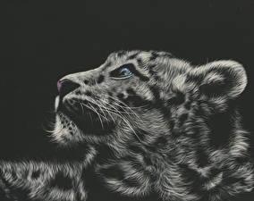 Фотография Большие кошки Рисованные Барсы Голова Черный фон Усы Вибриссы Черно белые животное