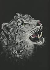 Картинки Большие кошки Барсы Рисованные Черный фон Головы Морды Черно белое Животные