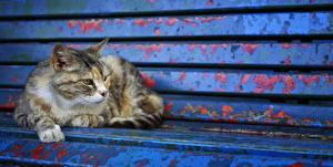 Картинка Коты Скамья Животные