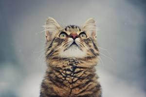 Фотография Кошки Смотрит Котята Животные