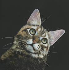 Картинки Кошки Рисованные Черный фон Голова Усы Вибриссы Взгляд Животные