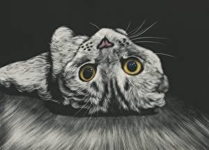 Фотография Кот Рисованные Взгляд Усы Вибриссы Морда Животные