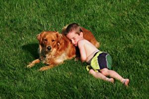 Картинки Собаки Трава Ретривер Мальчики Спит Ребёнок Животные