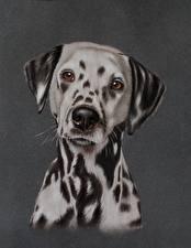 Фотография Собаки Рисованные Взгляд Далматин Животные