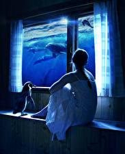 Обои Дельфины Пингвины Оригинальные Сидящие Окно Фантастика