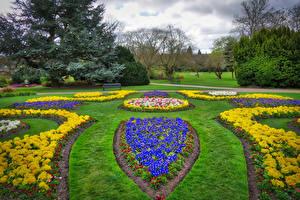 Фотография Англия Парки Примула Газон Sheffield Park Garden Природа
