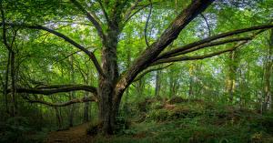 Картинки Германия Леса Бавария Деревья Ствол дерева Природа