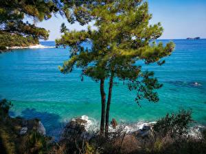 Обои Греция Залив Деревья Thassos Природа
