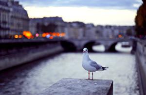 Фотографии Чайки Птица Водный канал