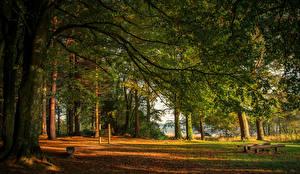 Обои Ирландия Леса Деревья Ветвь Castleblayney Monaghan Природа