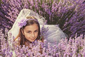 Картинки Лаванда Девочки Смотрит Шатенка Дети