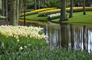 Фотографии Нидерланды Парки Пруд Тюльпаны Keukenhof Природа