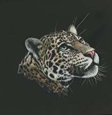 Фотография Рисованные Большие кошки Леопарды Голова Черный фон
