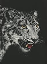 Фотография Рисованные Большие кошки Ирбис Черный фон Черно белые Головы Усы Вибриссы Смотрит животное