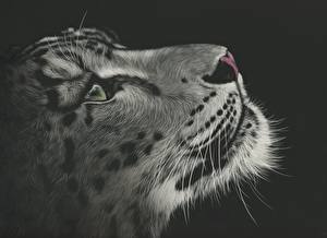 Фото Рисованные Большие кошки Барсы Крупным планом На черном фоне Усы Вибриссы Морды Черно белые животное