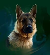 Фото Рисованные Собаки Овчарка Смотрит Животные