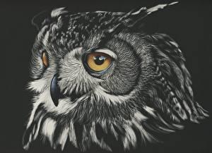 Обои Рисованные Совы Глаза Черный фон Голова Клюв Черно белое