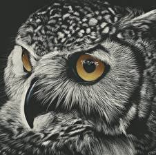 Картинки Рисованные Совы Глаза Крупным планом Черно белое Черный фон Клюв