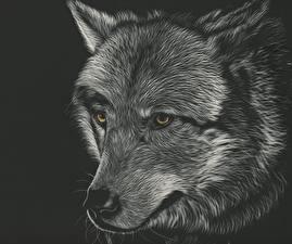 Фото Рисованные Волк Черный фон Черно белое Голова Смотрит Животные