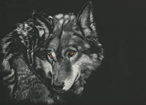 Фотографии Рисованные Волк На черном фоне Головы Черно белое Животные