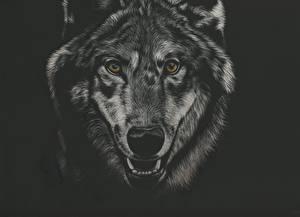 Обои Рисованные Волки Голова Черный фон Смотрит Черно белое Морда Животные