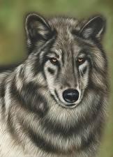 Фотографии Рисованные Волки Голова Смотрит Животные
