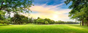 Обои Парк Лето Небо Трава Дерево Газоне Природа