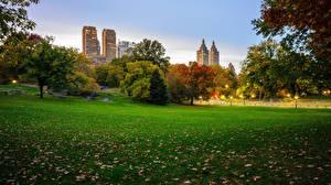 Картинки Парки США Нью-Йорк Трава Central Park Природа