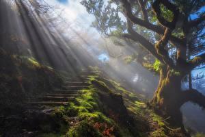 Картинка Лучи света Мох Деревья Лестница
