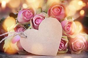 Фотография Розы День всех влюблённых Сердечко