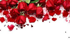 Картинки Розы День всех влюблённых Красный Лепестки Шаблон поздравительной открытки Цветы