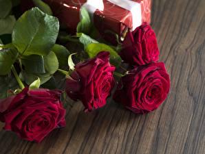 Фото Розы Бордовый Цветы