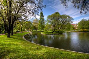 Фотографии Россия Санкт-Петербург Парки Пруд Деревья Трава Yusupovsky Garden Природа