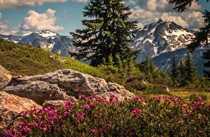 Обои Пейзаж Горы Штаты Вашингтон Cascade Range Природа